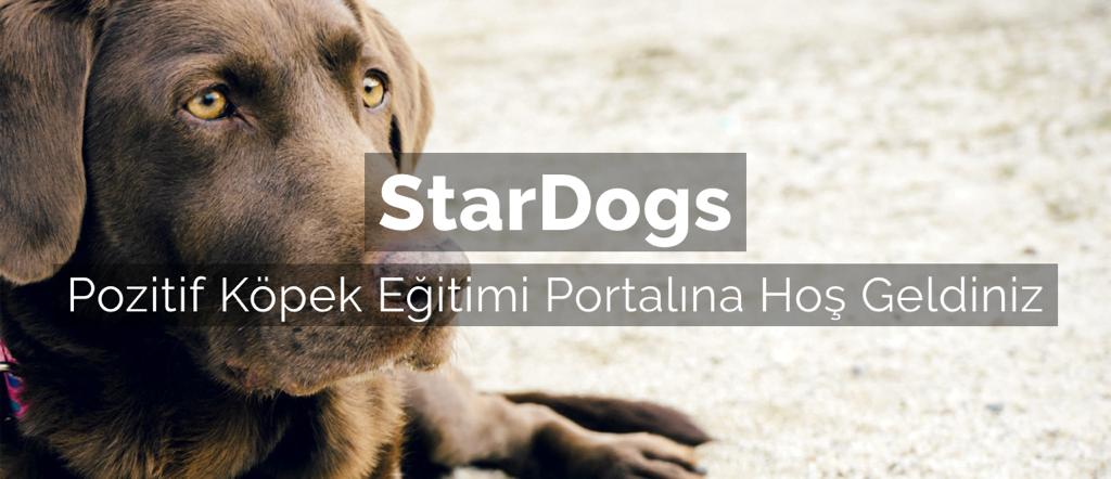 StarDogs Pozitif Köpek Eğitimi