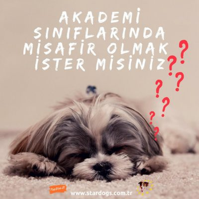StarDogs Türkiye Akademi Sınıflarına Misafir Köpek