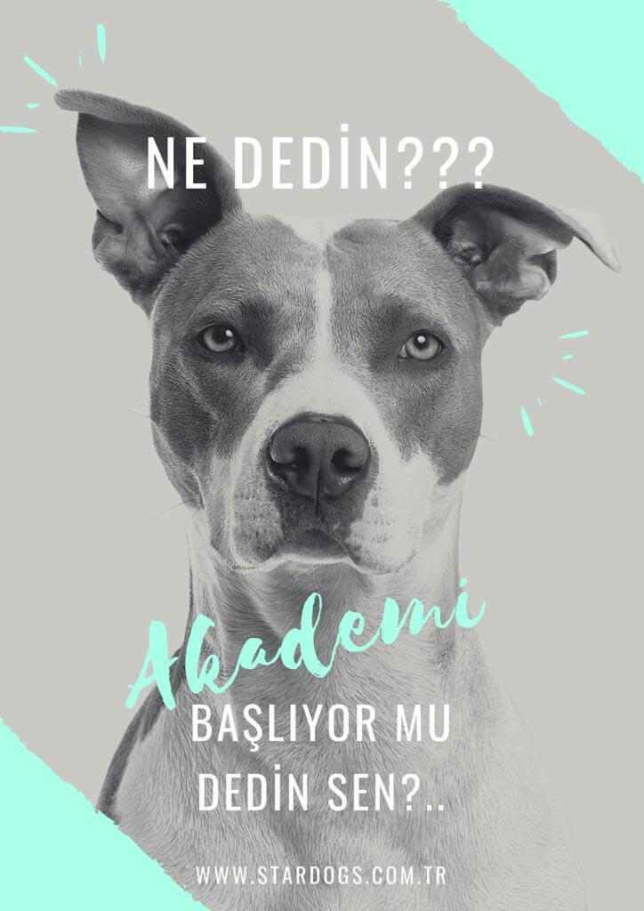 StarDogs Türkiye Akademi