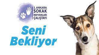 1. Ankara Sokak Hayvanları Çalıştayı - StarDogs
