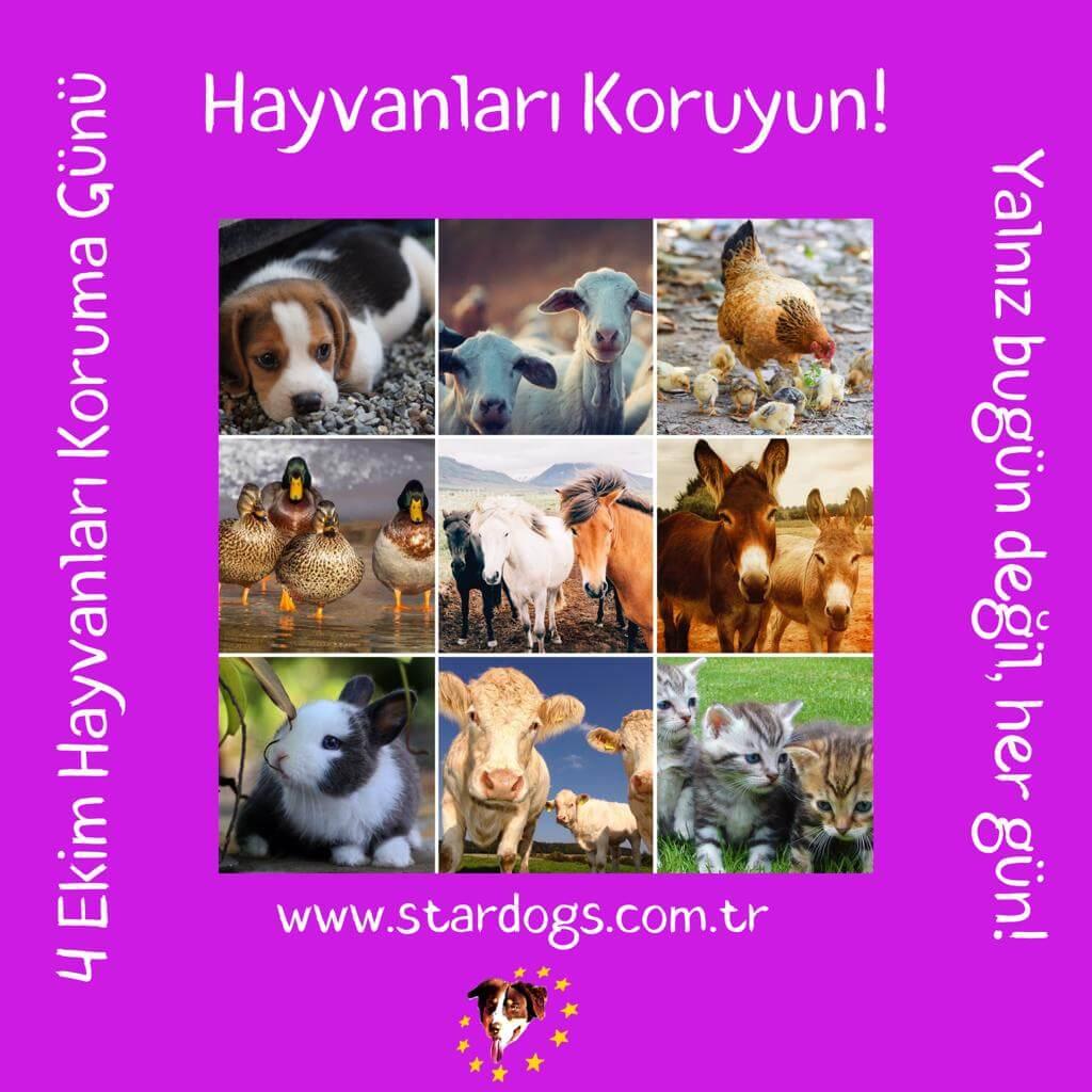 StarDogs - 4 Ekim Hayvanları Koruma Günü